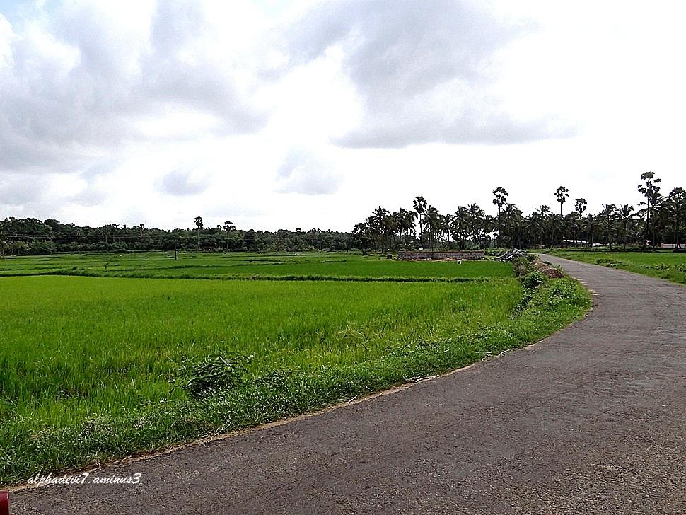 A few scenes from my village:)