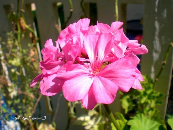 Pink again