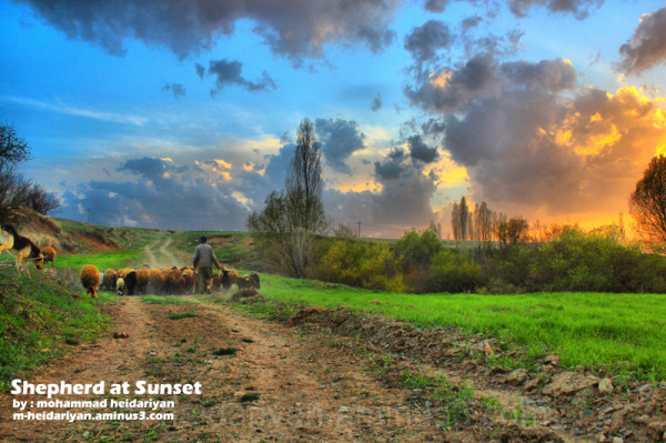 Shepherd at sunset