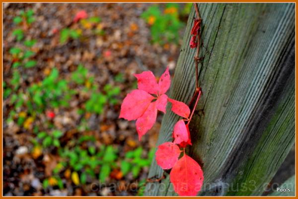 Fall !!