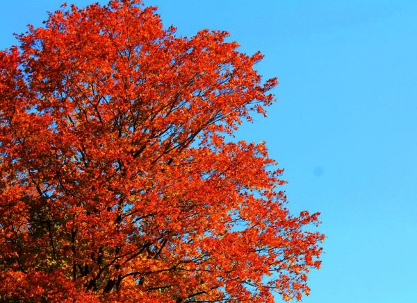 fall autunm colours color trees