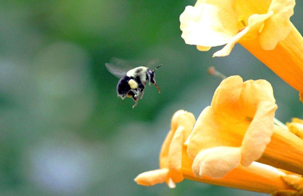 Bee Landing on a Flower