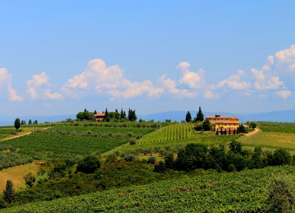 Tuscany, wine Vineyard, Italy, Green