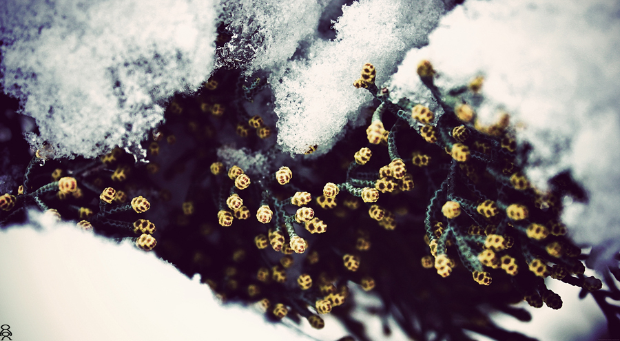 .'s in cold...