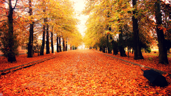Let's walk...