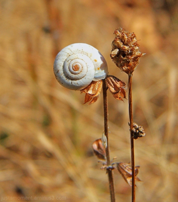Snail - 1.