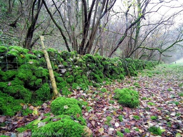 Old Wall - Biggin Dale, Derbyshire.
