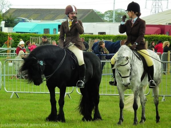 newark county show horses