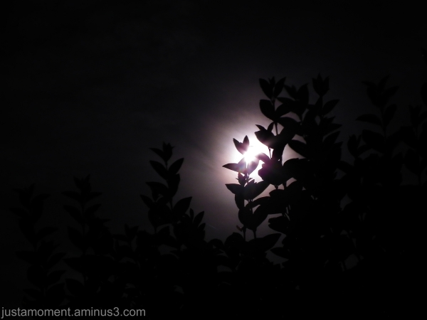 By the light of the moon - 1