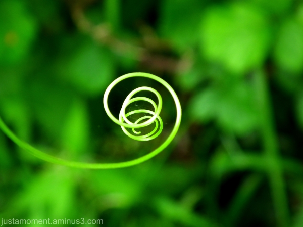 Spiral.