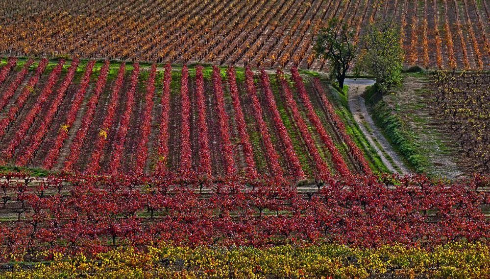 L'automne aux champs.
