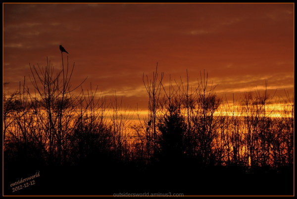 2012-12-12 sunset, a lone hawk....