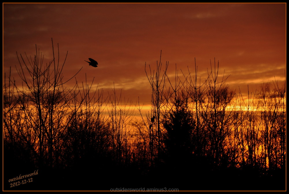 2012-12-12 sunset....good night hawk....