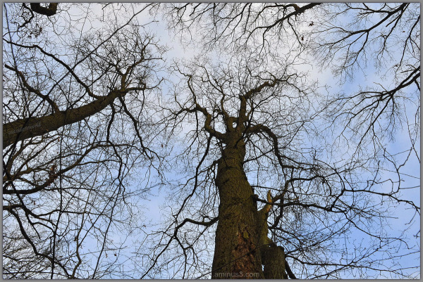Dance of the trees ...!!!