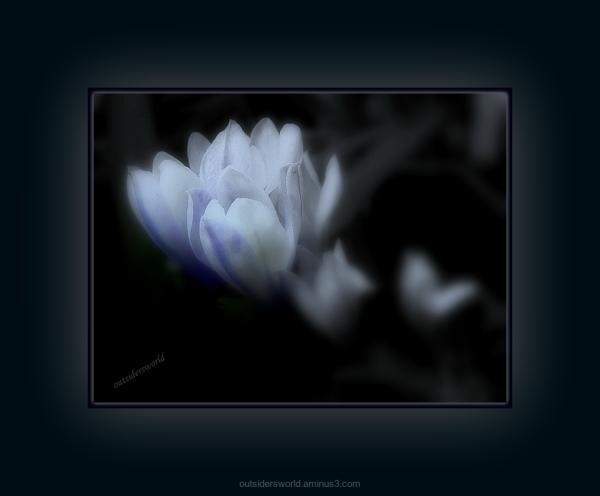 White Beauty ...for Jypyä Pop … Happy Sunday...!!!