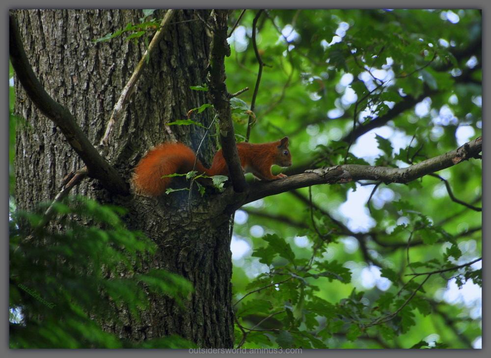Squirrel ... so close ... !!!