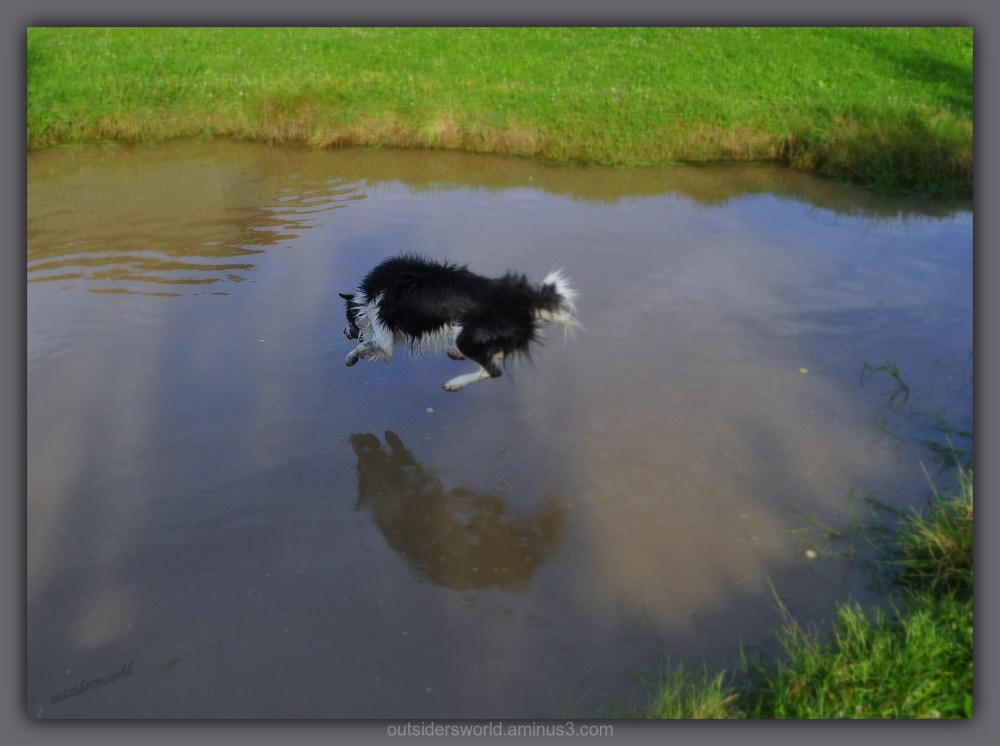 Flying Dog ... !!!