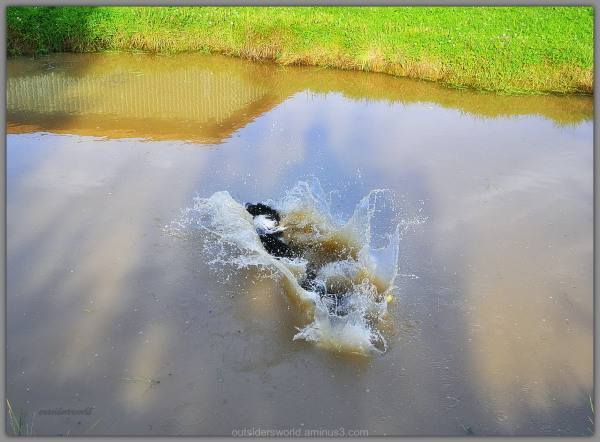 Flying Dog ... the landing … and splash ... !!!