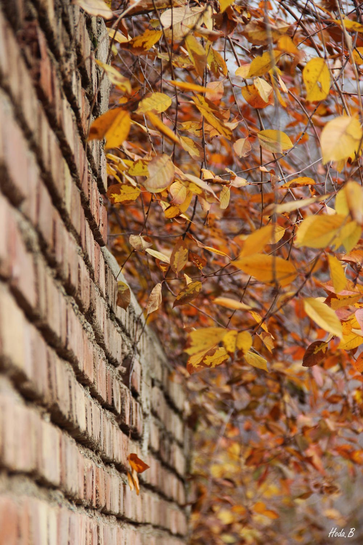 پاییزی که بود