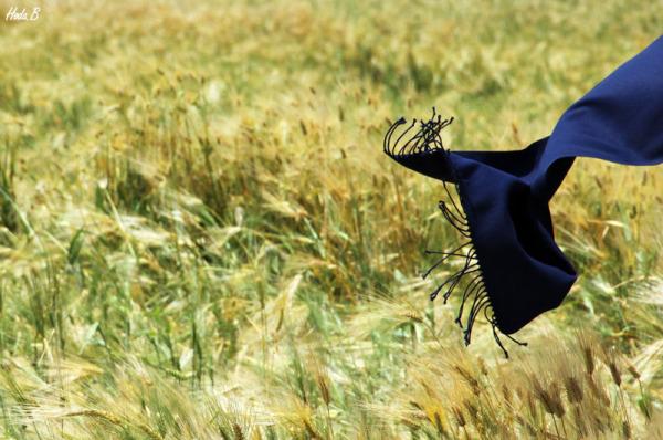 ...همچون باد، در گندمزار