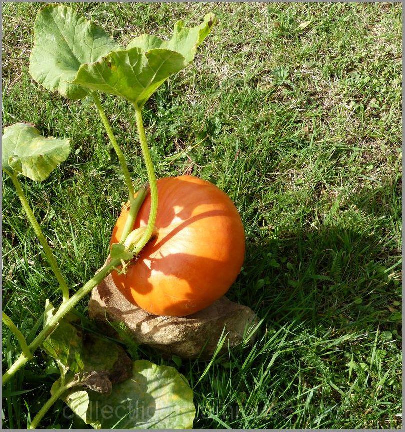 Rondeur orange