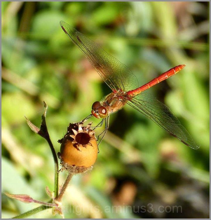 La libellule et sa boîte à trésor