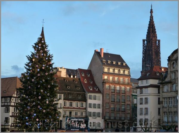 Un haut sapin se dresse à Strasbourg