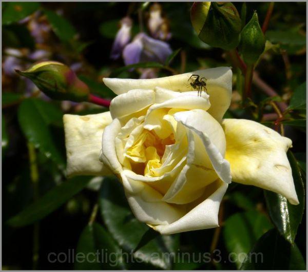 Les visiteurs des fleurs 3/...