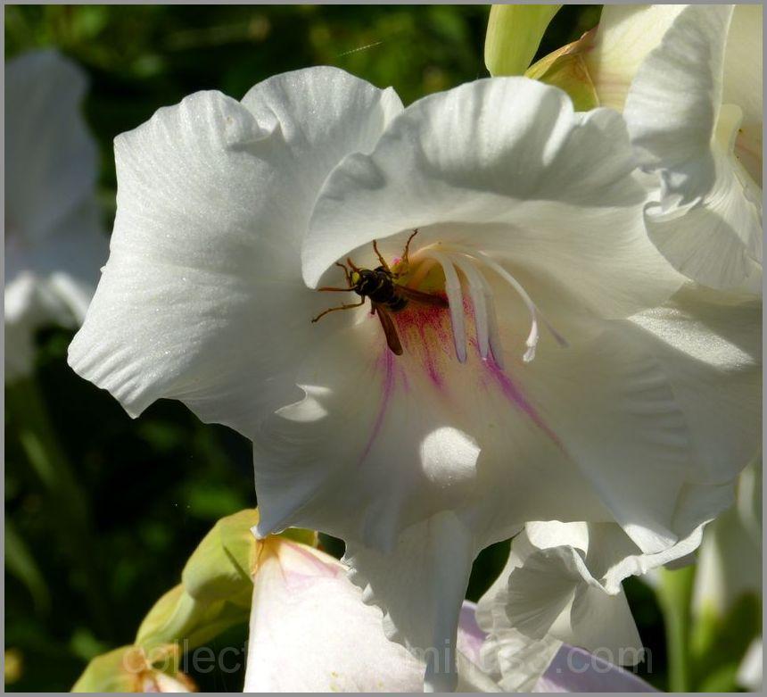 Les visiteurs des fleurs 14/...
