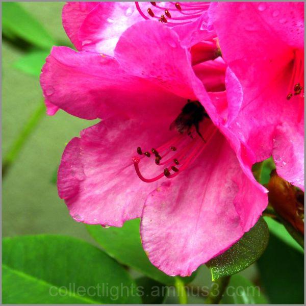 Les visiteurs des fleurs 28/...
