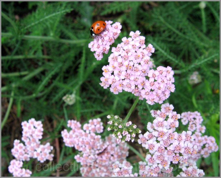 Les visiteurs des fleurs 22/...