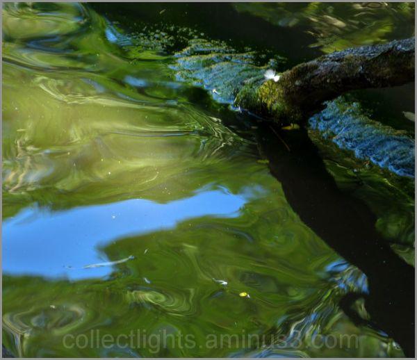 En eaux troubles 5/...