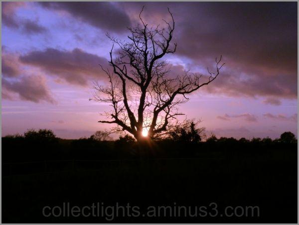 L'arbre offre un nid au soleil 1/2