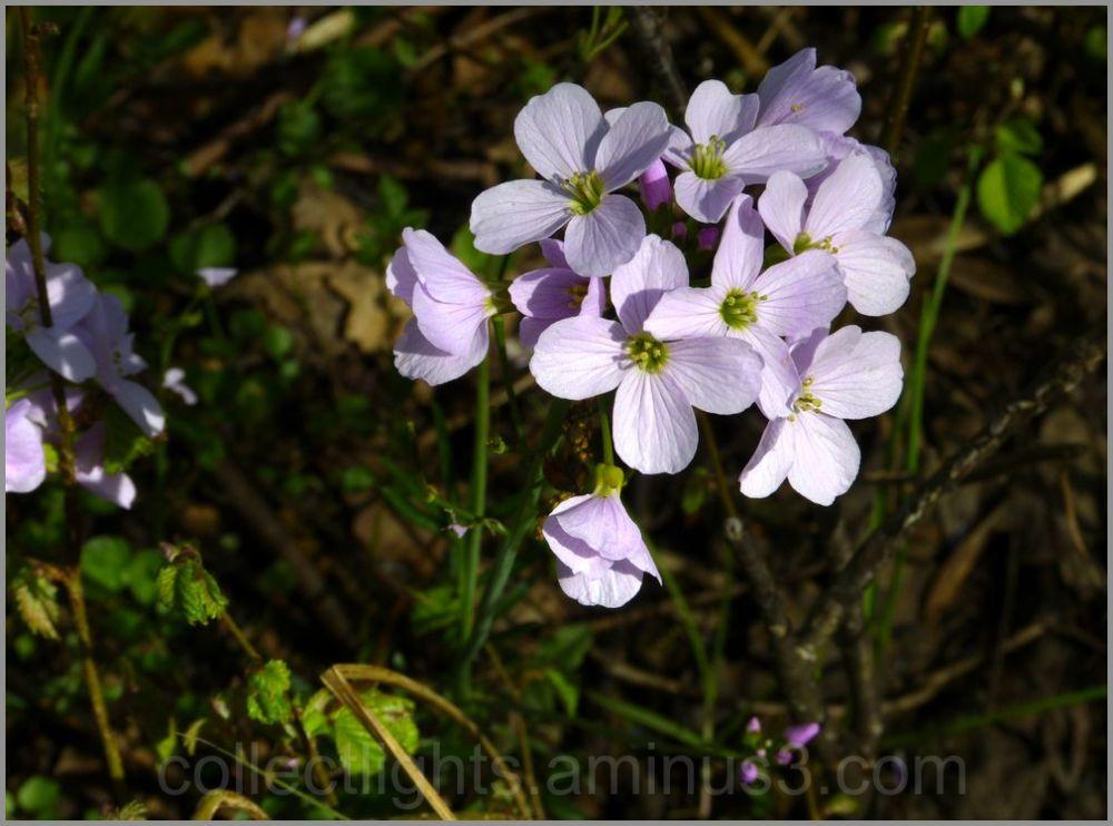 Fleur en sous-bois