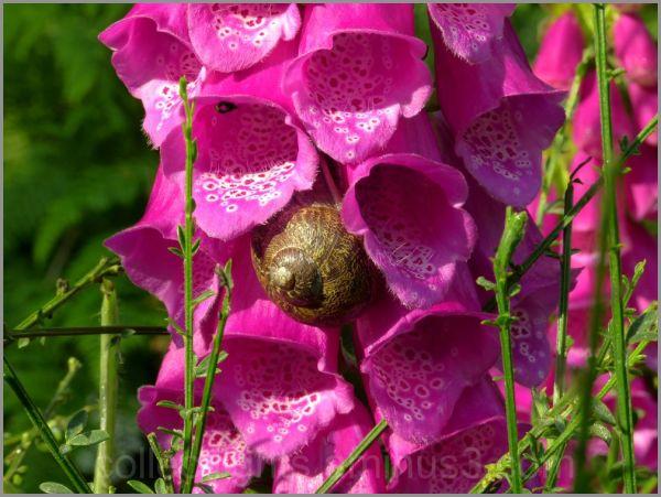Les visiteurs des fleurs
