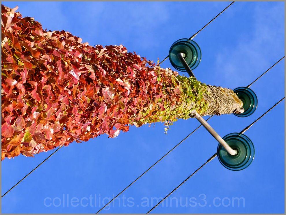 Habit d'automne sur poteau électrique