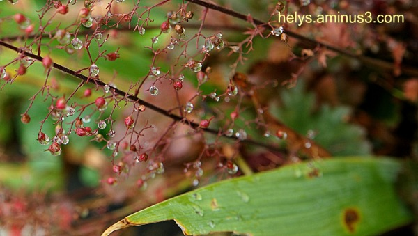 Droplets, tiny flowers1