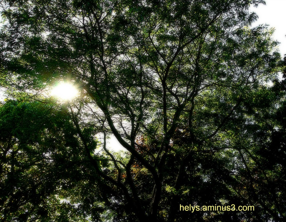 Lighting in the canopy