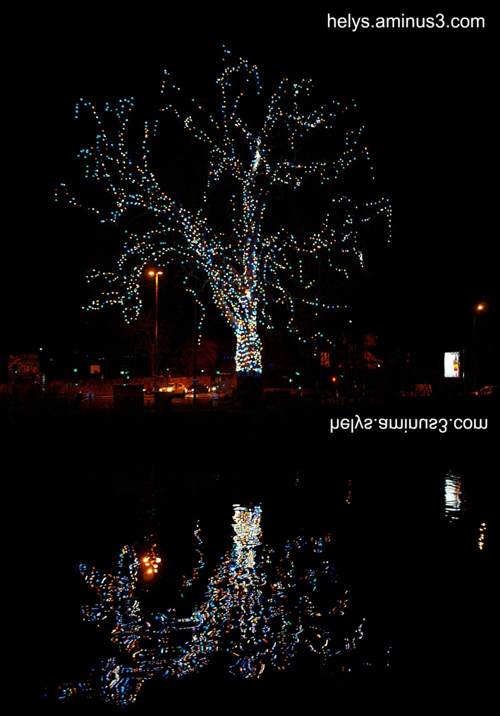 The tree and its reflections1