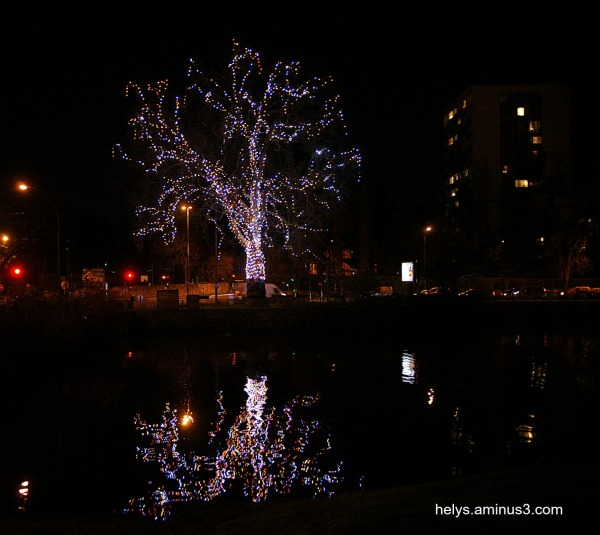 The tree, buildings and reflections
