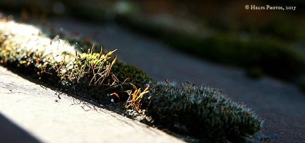 Moss in the spotlight