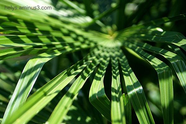 vegetal graphisms