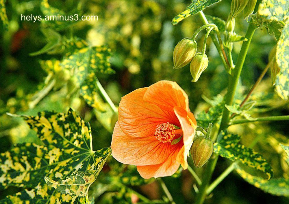 yellow/orange flower