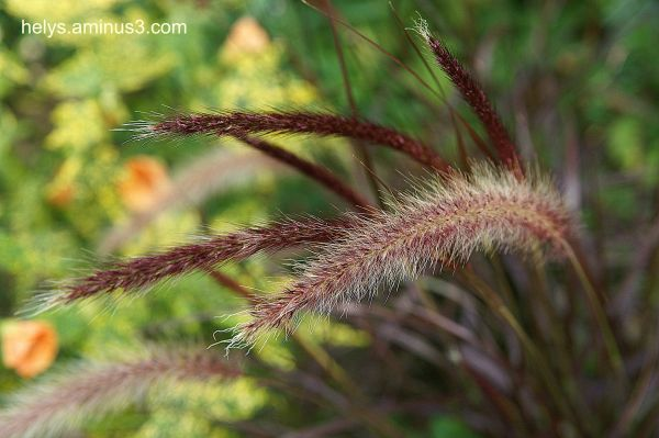 grasses are beautiful