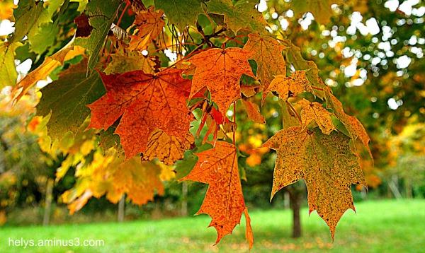 autumn colors4