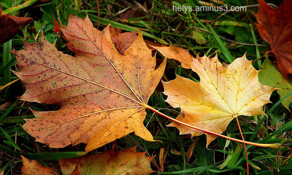 autumn colors13