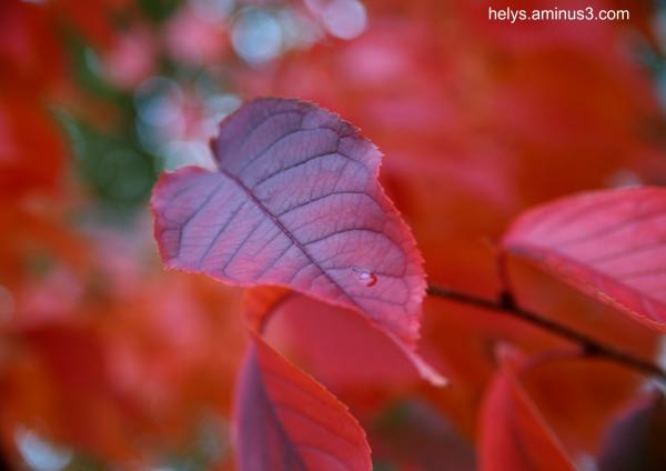 autumn colors2016/5
