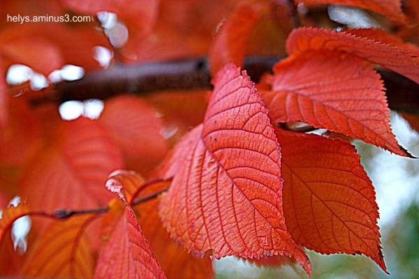 autumn colors 2016/12