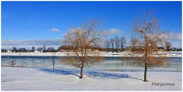 arbre rivière neige hiver ville
