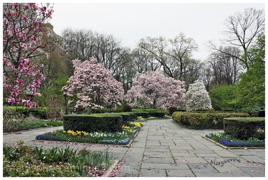 fleurs arbres parc urbanisme magnolia